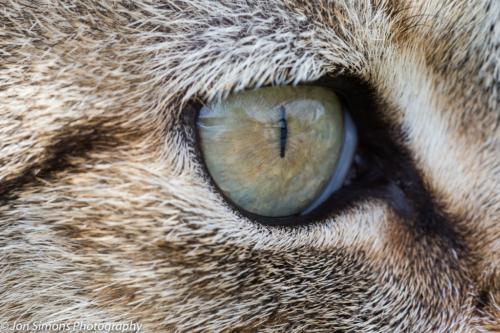 Cat's eye portrait
